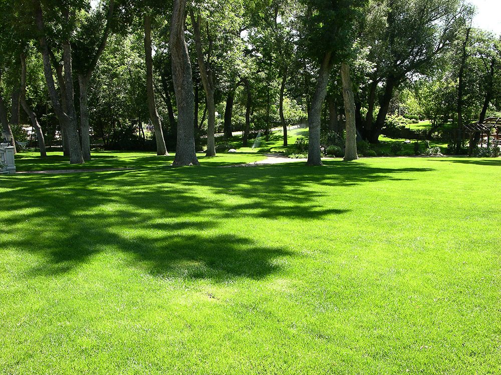 Colorado Springs lawn fertizization and weed control